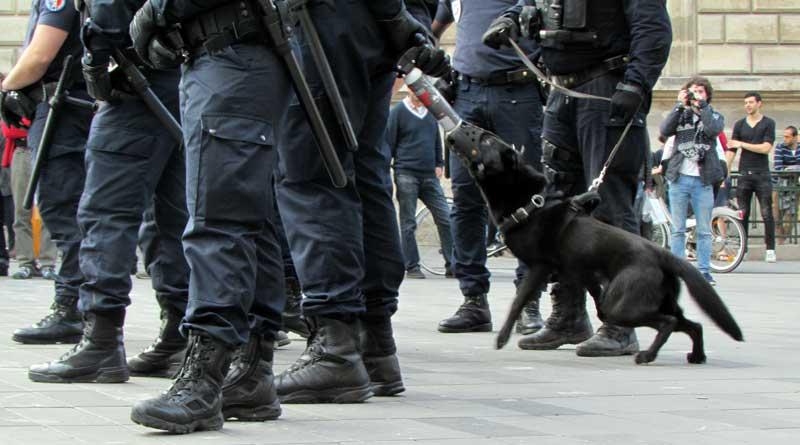 Chien de policiers