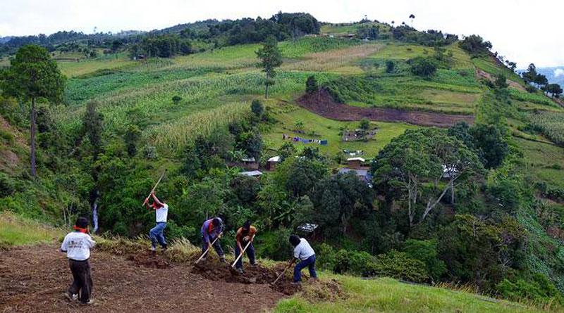 Travail agricole dans les hauts plateaux